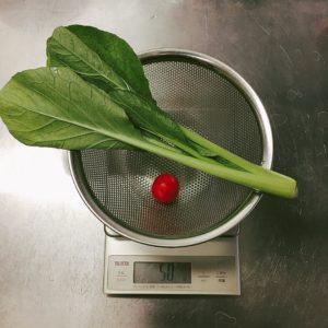 小松菜とミニトマト